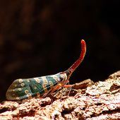 picture of horny  - a beautiful colors from horny cicada in nature - JPG