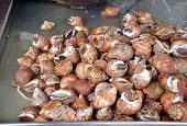 Whelks At The Fresh Market