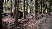 Rockwood Forest