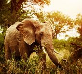 Huge elephant outdoors, big five, game drive, African nature, beautiful wild animal, national park,
