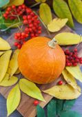 Harvested Pumpkin With Ashberry And Fall Leaves Around