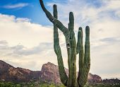 Art landscape image of Saguaro cactus tree and Camelback Mountain in background, Scottsdale,Phoenix,AZ