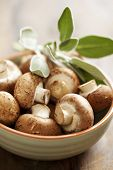 picture of crimini mushroom  - bowl of fresh brown button mushrooms - JPG