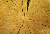 Cut Of Tree
