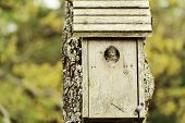 Baby Bird in Birdhouse