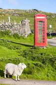 telephone booth with sheep, Clashnessie, Highlands, Scotland