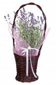 Aromatic lavender in a basket isolated on white background