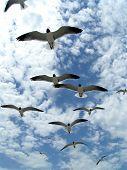 Seagulls In Flight 6