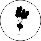 beet symbol