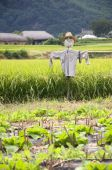 Scarecrow,south Korea