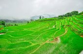 South China, Yunnan - 2011: Rice Terraces In Highlands