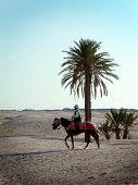 Desert Rider poster