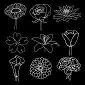 flowers outline illustration
