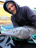 VODNANY CZECH REPUBLIC - FEBRUARY 26, 2014: unidentified fisherman with caught Sturgeon in fish nurs