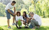 Group of multiethnic environmentalists planting in park