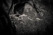 Lensbaby blur leaves