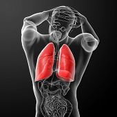 Human respiratory system in x-ray
