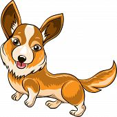 stock photo of corgi  - Funny illustration with Welsh corgi dog drawn in cartoon style - JPG