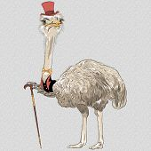 foto of top-hat  - sketch closeup portrait of funny Ostrich Bird hipster in red top hat and gold bowtie with walking stick - JPG