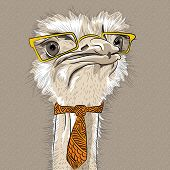 Vector Closeup Portrait Of Funny Ostrich Bird Hipster