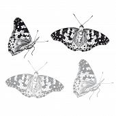 Butterfly set. Vector