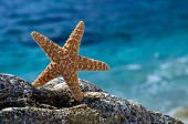 starfish on the beach in summer