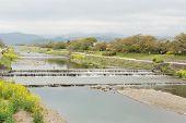 Scenery of Kamogawa with yellow flowers in Kyoto.