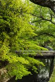 Emerald green maple and a variety of plants grown  near the small stream in Kyoto.