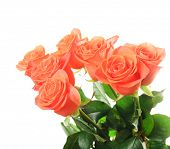 Bouquet of beautiful roses isolated on white