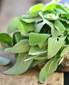 Fresh green sage on a wooden table.