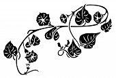 petunia and vines