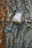 Snail sticks on tree bark