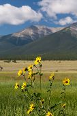 Farmyard And Flowers By Mt Princeton Co