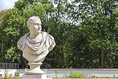 Bust Of Vitellius In Lazienki, Warsaw, Poland