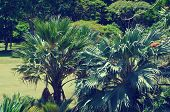 Palm Leaves Over Ocean In Hawaii (vintage Style)