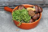 boletes and moss in terracotta pan