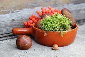 boletes and rowan in terracotta pan