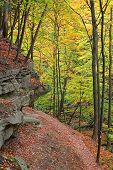 Hiking trail in deep autumn forest