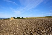 Late Summer Agriculture