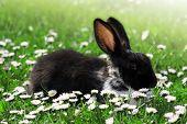 Cute Rabbit in Grass
