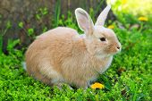 Cute rabbit, outdoors