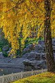 Birch Tree In Autumn Garden