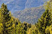 view over coniferous forests, symbol of nature, growth, carbon storage