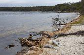 Beach side of Wallagoot Lake, Bournda National Park,Australia
