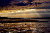 Nice Dark Gold Sunset On Water