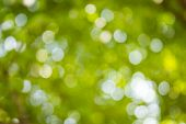Natural Green Blurred And Bokeh Background,abstract Backgrounds.