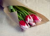 Tulips in parchment package