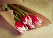 Tulips in parchment package. toning