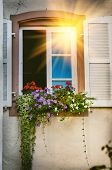House Window Decorated With Colorful Geranium