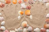 Imprint Hands On The Sand Among The Shells